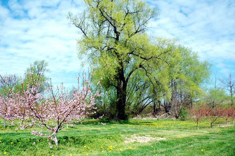 Niagara Spring Photos